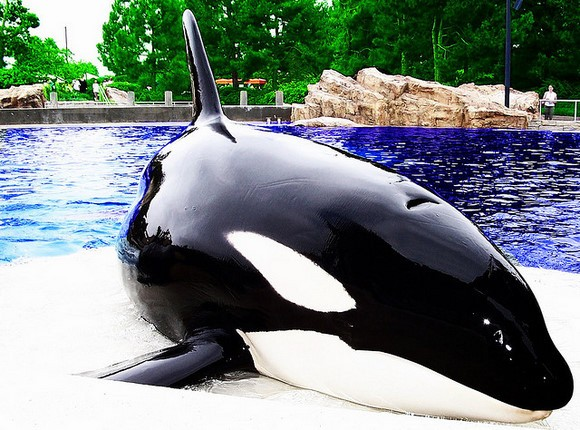 Tommy Lee continues his campaign against SeaWorld's whale breeding practices