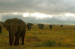 Travel the Serengeti on foot with Mountain Madness
