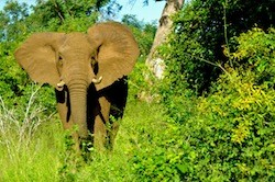 Elephants are being killed at an alarming rate in Cameroon