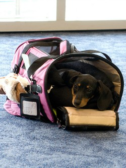dog carrier airport