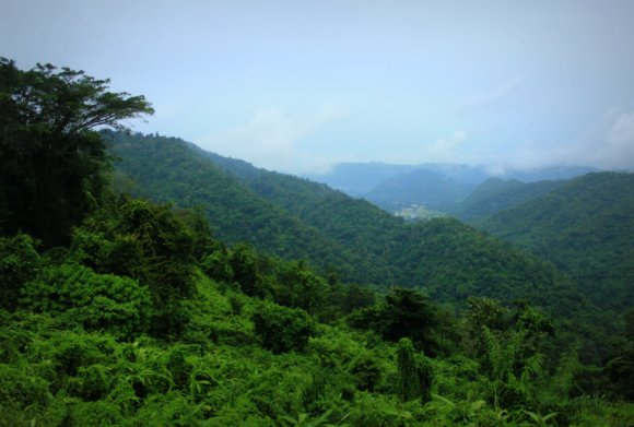 Jungle Valley in Khao Yai National Park, Thailand